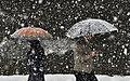 Snowy day of Rasht - 26 November 2011 14.jpg