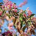 Spring Arriving In Vienna (III) (37943475821).jpg
