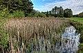 Springhead Park IMG 3006 - panoramio.jpg