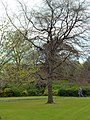 St. Stephen's Green - panoramio.jpg