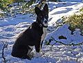 Stella (3020042502).jpg