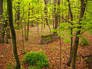 Delaware Township, Pike County, Pennsylvania - Isolated stone wall in the woods in Delaware Township, within the Delaware Water Gap National Recreation Area