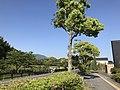 Street view near site of Former Dazaifu Headquarters.jpg