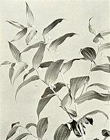 Streptopus lanceolatus WFNY-f004.jpg