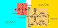 Struktur eines Phospholipids.png