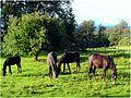 Stutenweide - panoramio.jpg