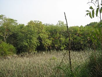 Sundarban , delta , forest 05.jpg