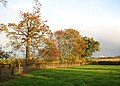 Sunlit trees beside a fence - geograph.org.uk - 1566957.jpg