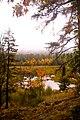 Swamp (1538967541).jpg