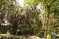 TU Delft Botanical Gardens 6.jpg