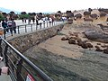 TW 台灣 Taiwan 新台北 New Taipei 萬里區 Wenli District 野柳地質公園 Yehli Geopark August 2019 SSG 175.jpg