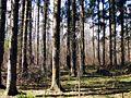 Tabore Parish, LV-5465, Latvia - panoramio (3).jpg