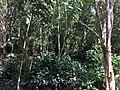 Tangkiling Nature 13.jpg