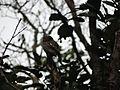 Targeted owl.jpg