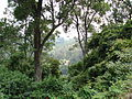 Tea Estate - Wald - Valley, Coonoor.JPG