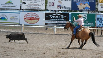 Team roping - Heeler has successfully roped the hind legs of the steer, the more difficult of the two roping tasks