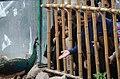 Tehran Birds Garden - 1 April 2015 (1394011218385416).jpg