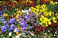 Teignmouth Blooms Again - 7 - Flickr - Sir Hectimere.jpg