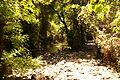 Tel-dan-stream-paradise.JPG