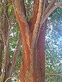 Termite colony.jpg