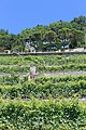 Terrasses de Lavaux - panoramio (75).jpg