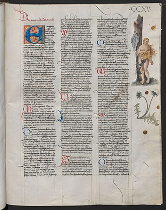 Heldenbuch - The Ambraser Heldenbuch, folio 215r. The initials VF on the shield are assumed to be those of the artist.