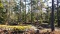 The Awakening of Nature - panoramio.jpg