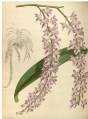 The Orchid Album-01-0065-0021.png