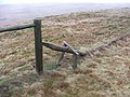The World's most rickety stile. - geograph.org.uk - 162771.jpg
