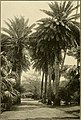 The ornamental trees of Hawaii (1917) (14579298299).jpg