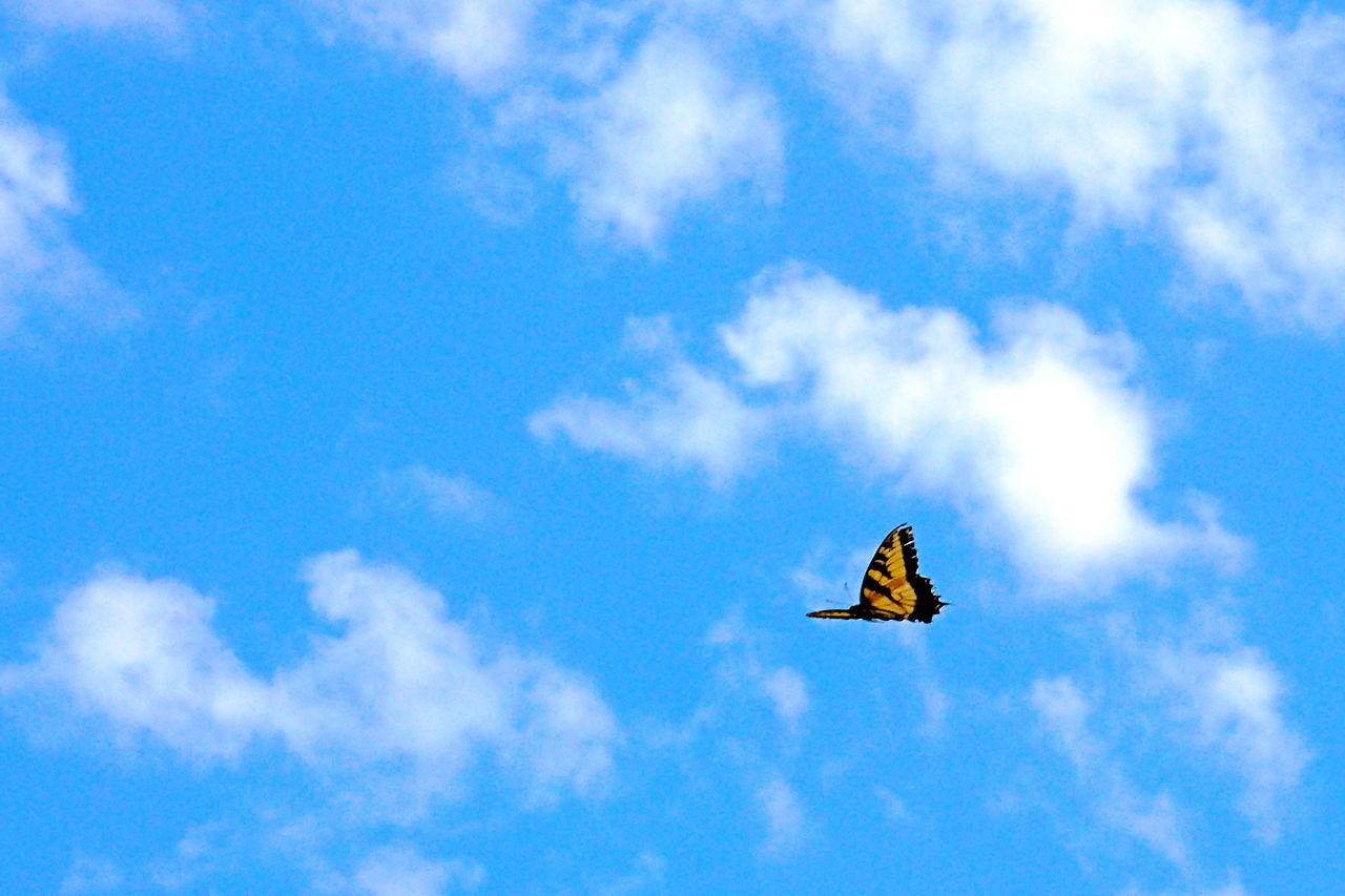 Schmetterling (Quelle: Wikipedia)