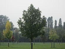 Baumpark thedinghausen wikipedia - Gartentage thedinghausen ...