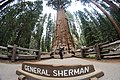 Theresa and General Sherman - Sequoia National Park (31327364764).jpg