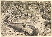 Dessin en niveaux de gris d'un bord de mer, où trois cachalots gisent sur le sable. D'autres sont dans l'eau, peut-être sur le point de s'échouer également.
