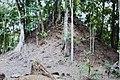 Tikal (10514767325).jpg