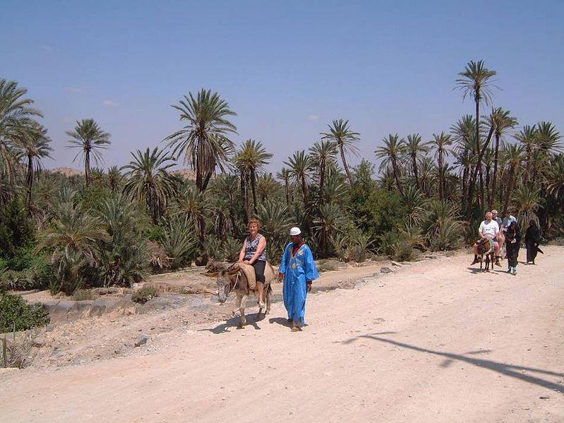 Palmeraie de Tioute - Taroudant, Maroc
