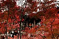 Tofuku-ji (4585774014).jpg