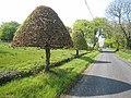 Topiary at Drumsoghla - geograph.org.uk - 1612529.jpg