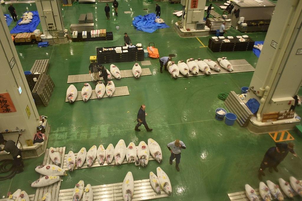 Toyosu fish market-4a