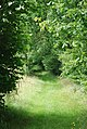 Track from Pitton Lodge towards Clarendon Palace - geograph.org.uk - 509028.jpg