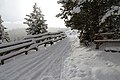 Trail to Tower Fall viewing platform (23868815186).jpg