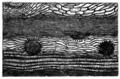 Trans. Linn. Soc. London - Volume 20 - Plate 24 - Figure E.png