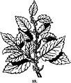 Trattato completo di agricoltura I fig064.jpg
