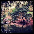 Tree - panoramio (62).jpg