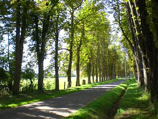 Avenue (landscape) straight route with a line of trees or large shrubs running along each side