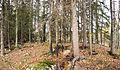 Trees on Kapeenniemi.jpg