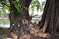 Trees with Buddhist Images (33758817798).jpg