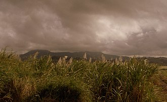 Triangle, Zimbabwe - A field of sugarcane owned by Triangle Ltd., the main land owner in the small town.