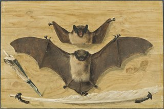 Trompe l'oeil: Two bats nailed to a timber wall, knife and quill pen (\