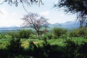 Die Landschaft des Tsavo West